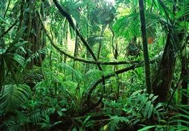 Jungle & Rainforest