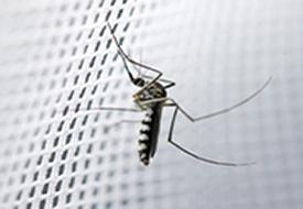 Midge and Mosquito Netting