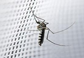 Mosquito & Midge Netting